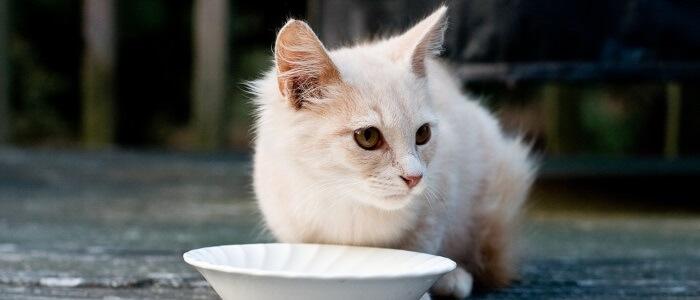 Waarom Krabt Een Kat Naast De Voerbak Praktijk Voor