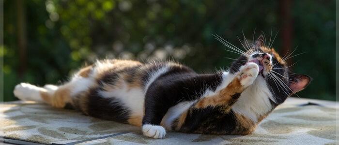 hoe oud wordt kat