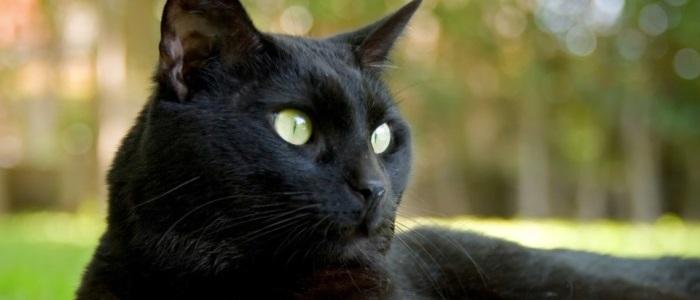 7 redenen waarom een kat in huis poept