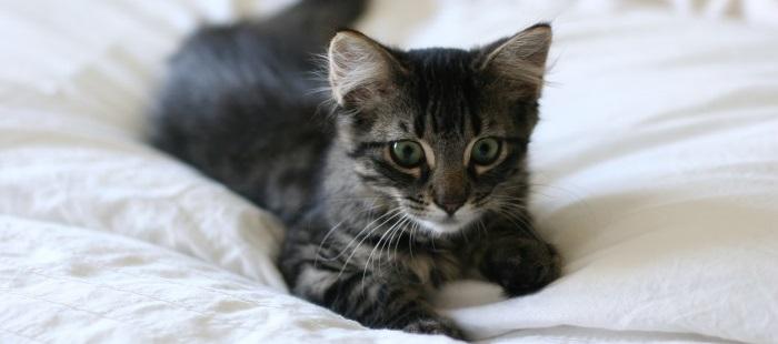 kat blijft miauwen