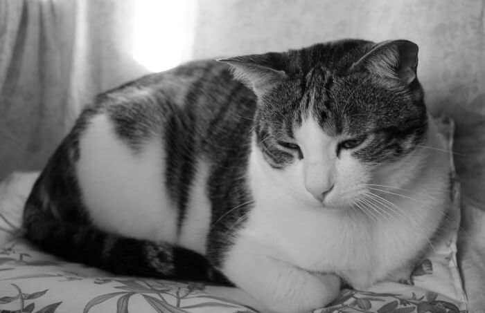 Verlatingsangst: als je kat je mist - Praktijk voor Kattengedrag